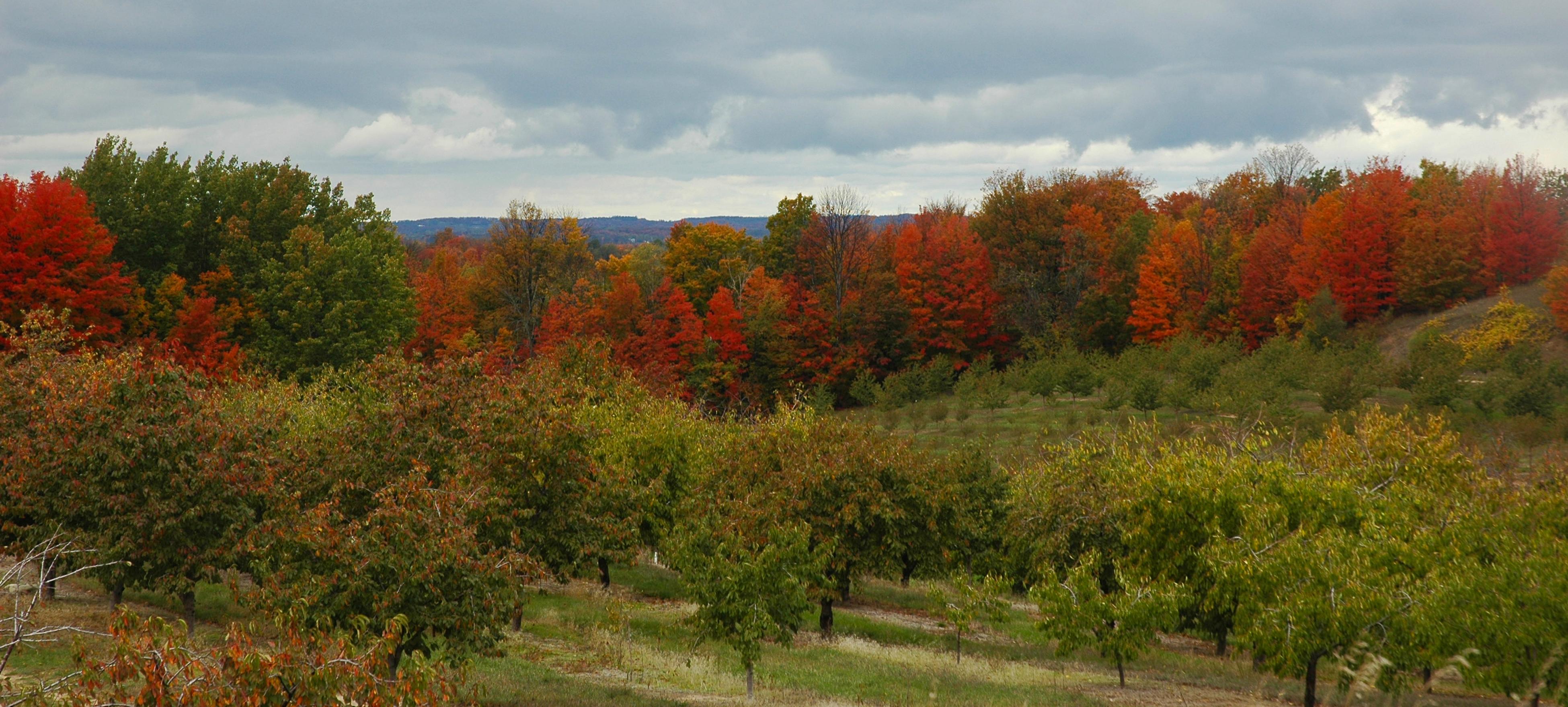 Fall Overcast Photo